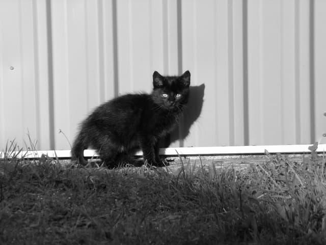 chaton dans le jardin